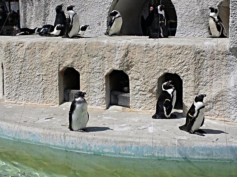 上野動物園 ペンギン