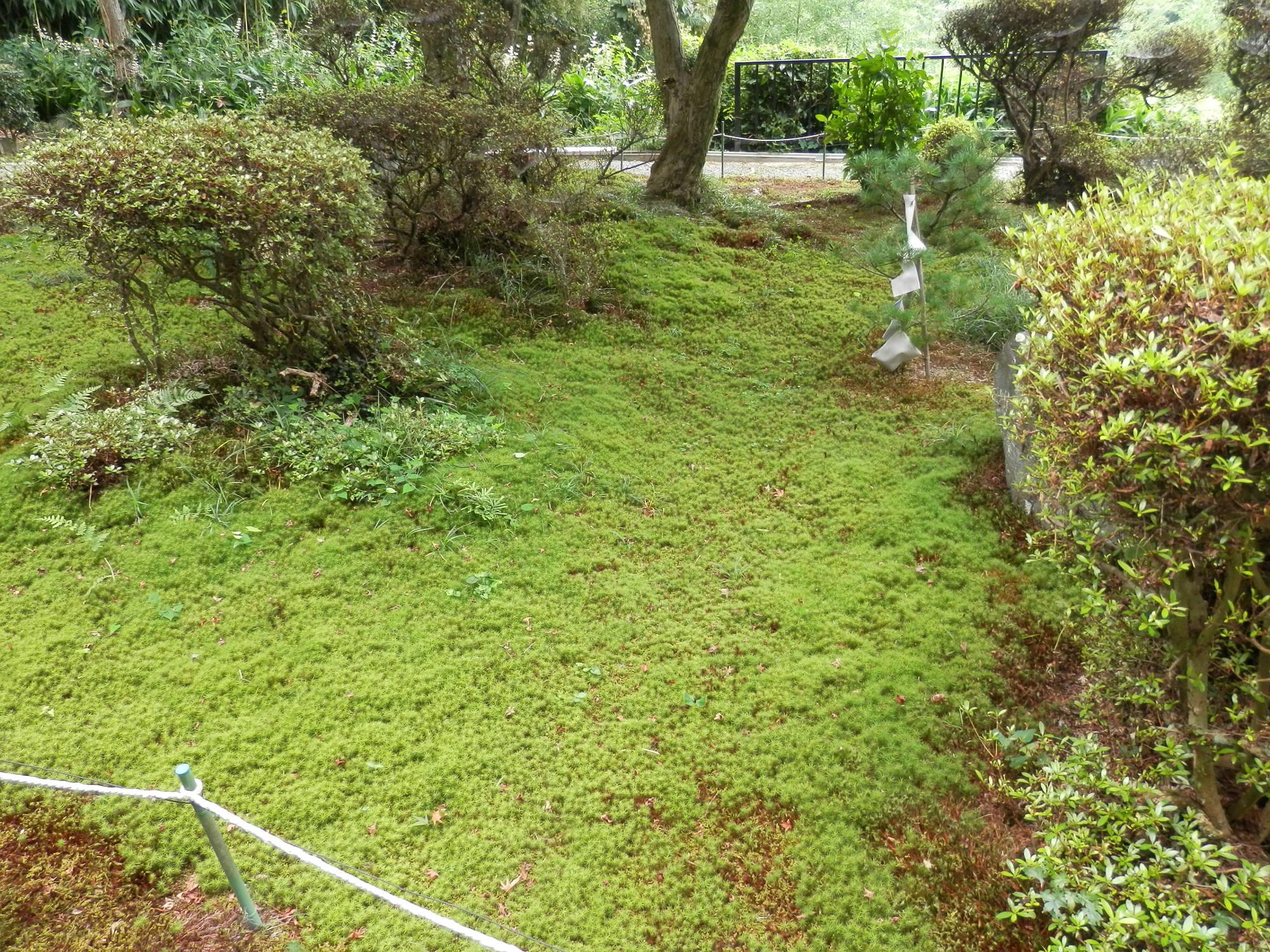 清水寺 苔の庭