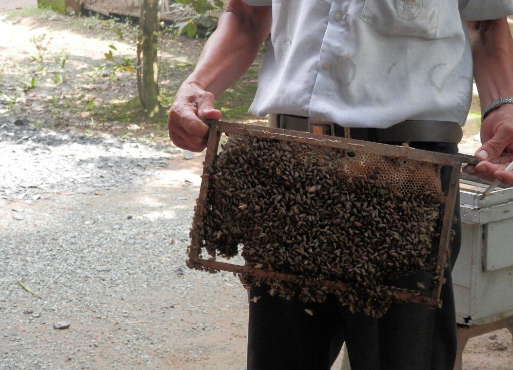 ベトナムメコン川クルーズ養蜂場