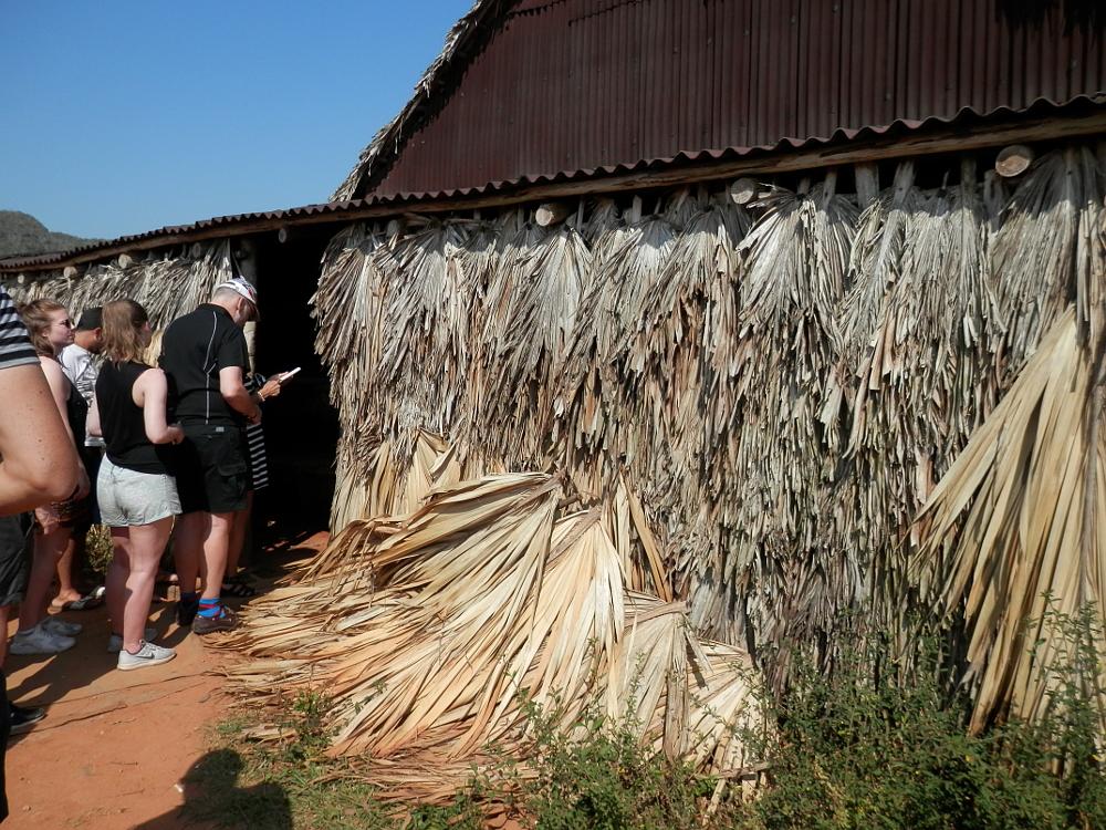 ビニャーレス渓谷ツアー タバコ農園 作業場入り口