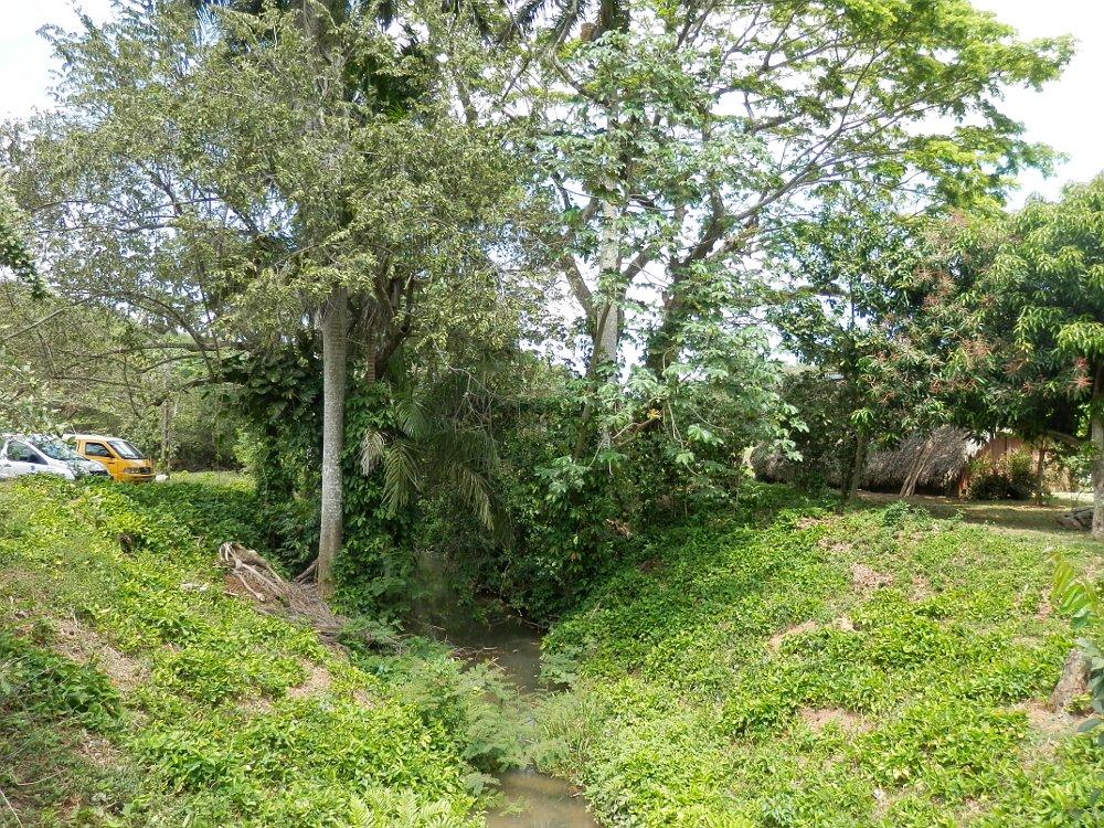 ビニャーレス渓谷ツアー自然の写真