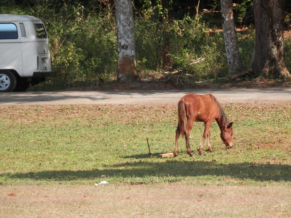 ビニャーレス渓谷ツアー プレイストリアの壁画 馬